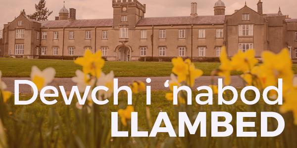 Dewch i 'nabod… Llambed